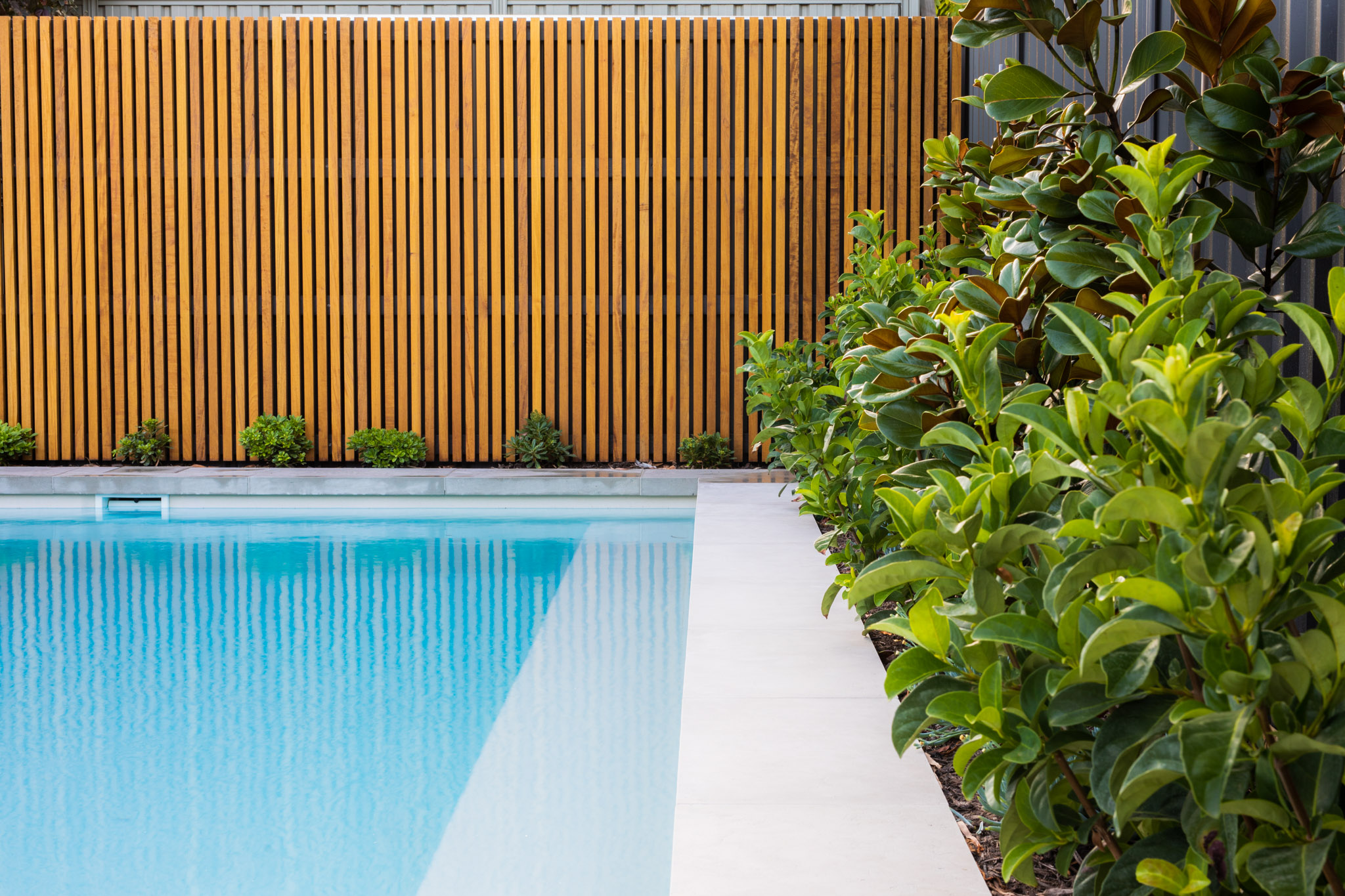 A pool with a wooden panel fence and shrubs